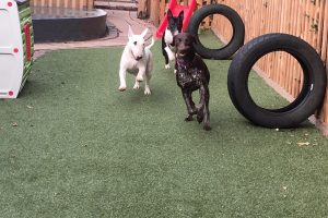 doggy day care kidderminster